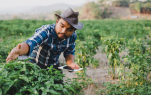Wefarm: The Platform Empowering the World's Small-Scale Farmers